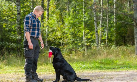 How to Find A Good Dog Trainer