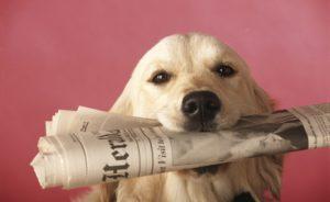 dog-journal