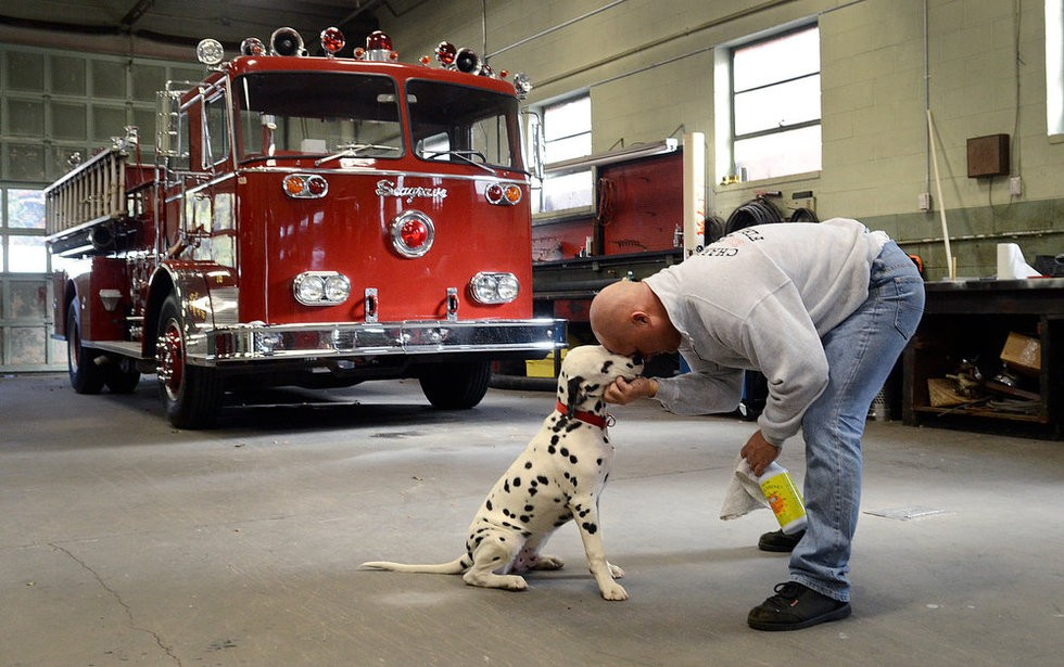 Dalmations and fire stations