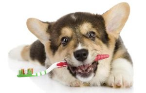 Dog Grooming – Dental Issues