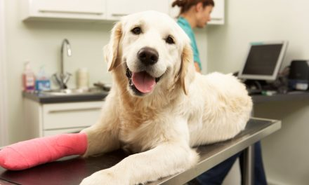 Why is it important to have Pet Insurance?
