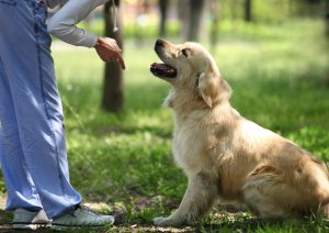 Positive Reinforcement dog | Dog Training