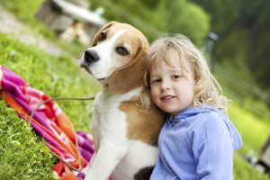 beagle loves children