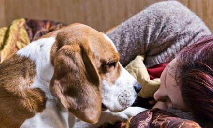 How to improve dog behavior