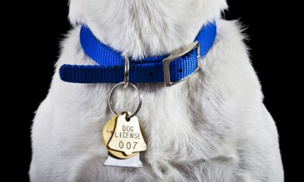 How to Choose The Right Dog Collar
