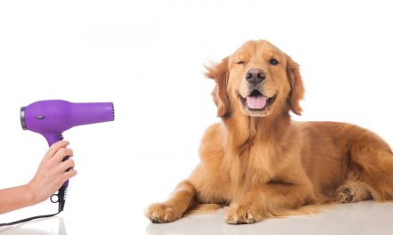 Why do you need to groom your dog?