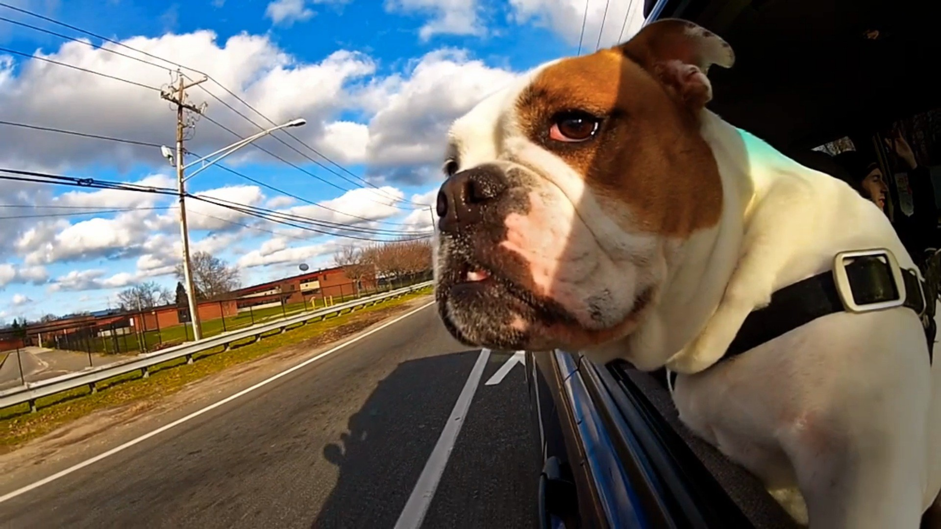 Dogs and Cars: how to travel with a dog
