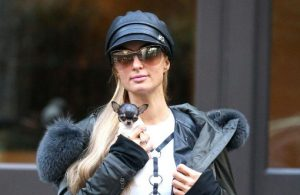 paris hilton and chihuahua