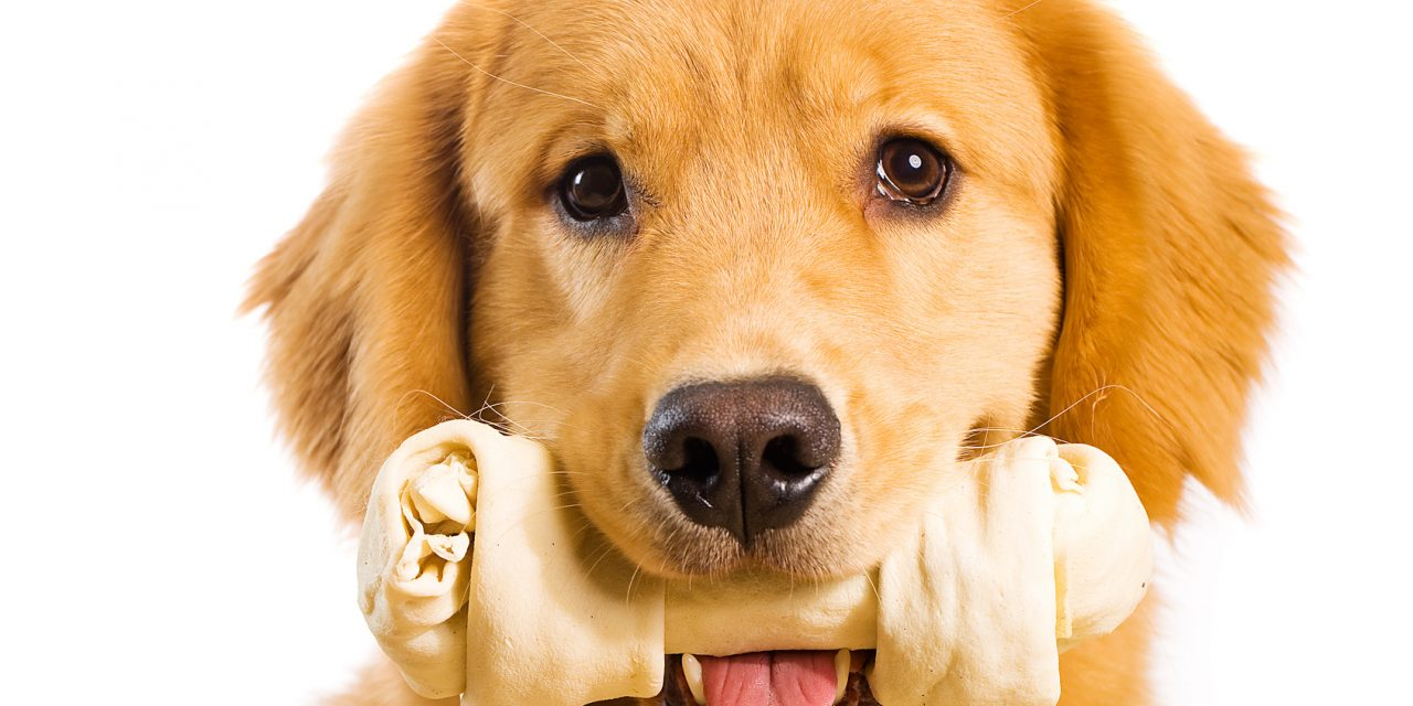 How To Stop Your Dog Chewing