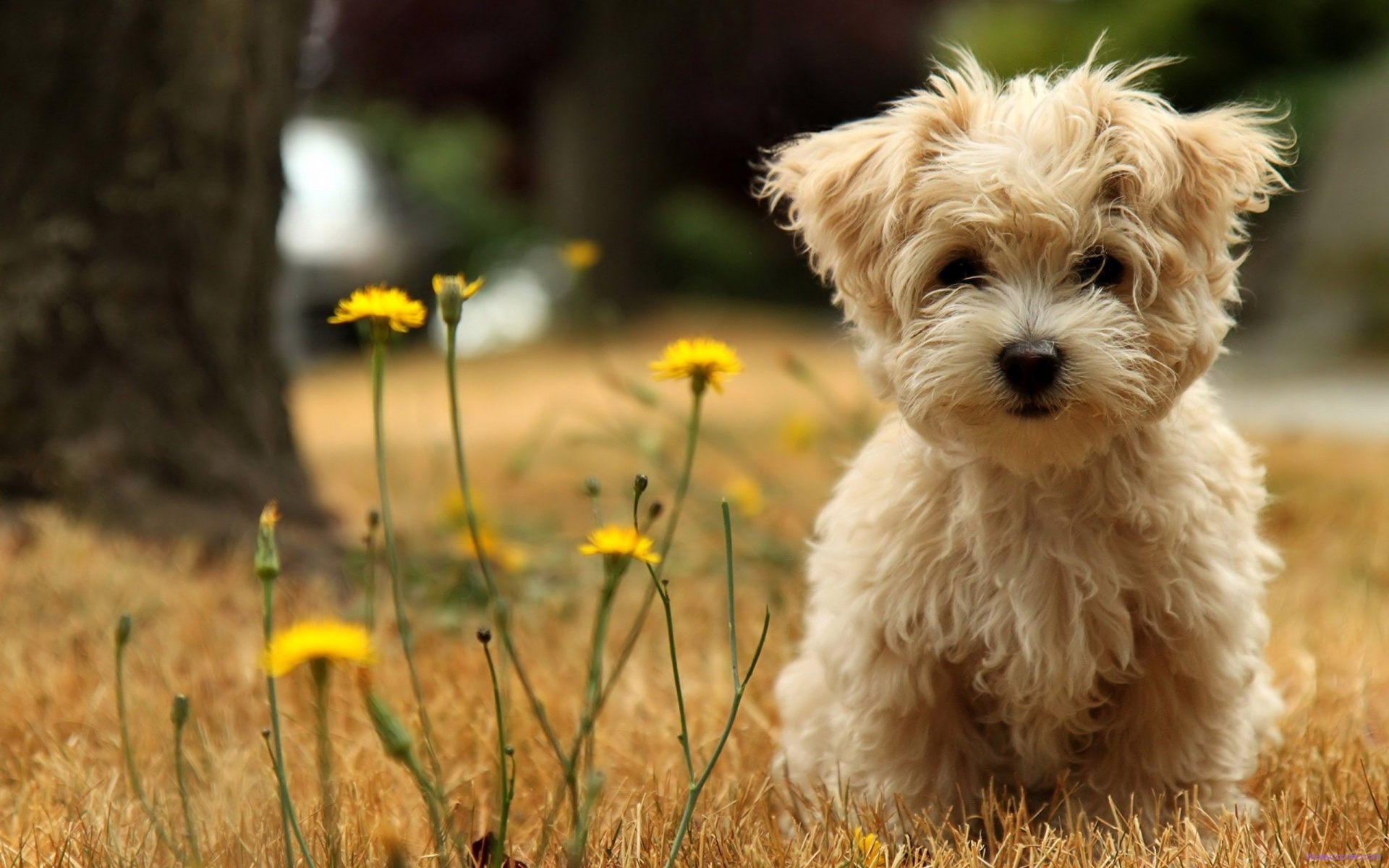 Why a Maltese Should Be Your Dog Of Choice?